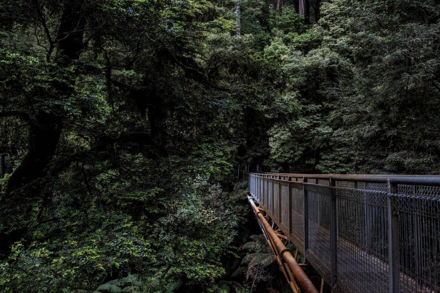 Passerelle métallique dans une forêt verte